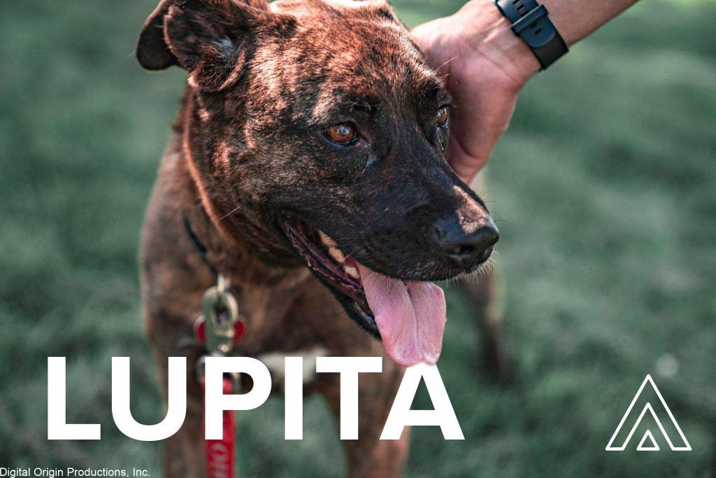 Lupita was such a freindly pup to work with!