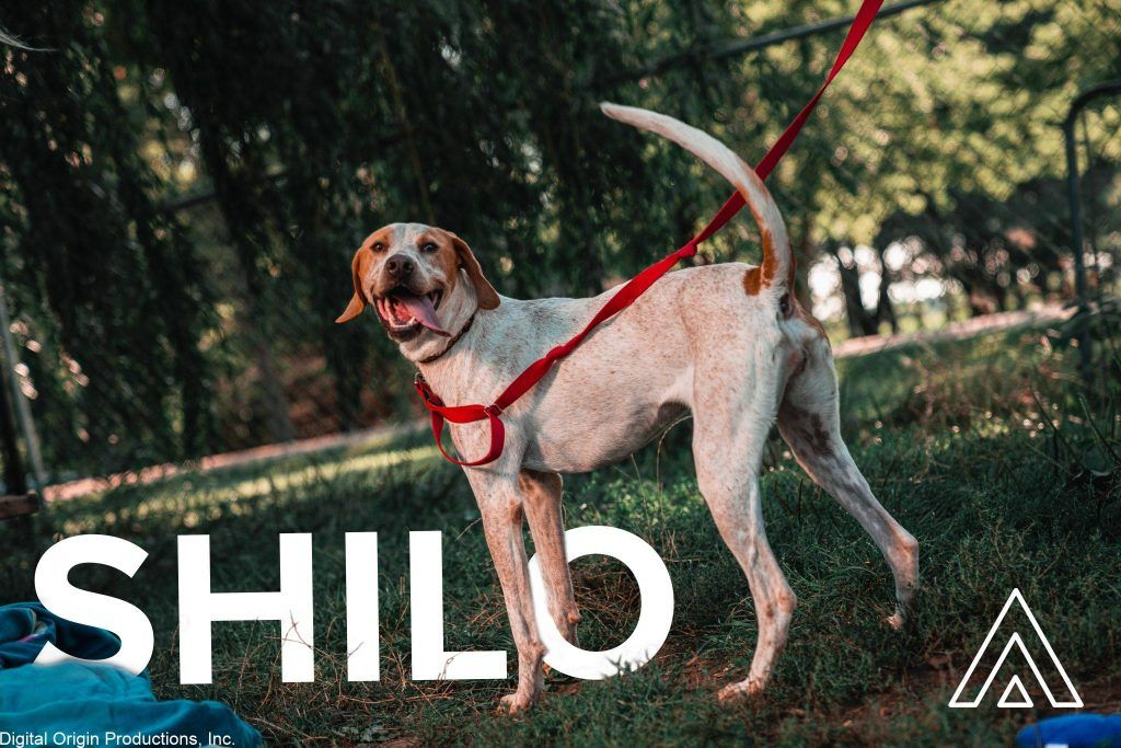 Shilo was another playful pup! Had a great time playing and photographing him.