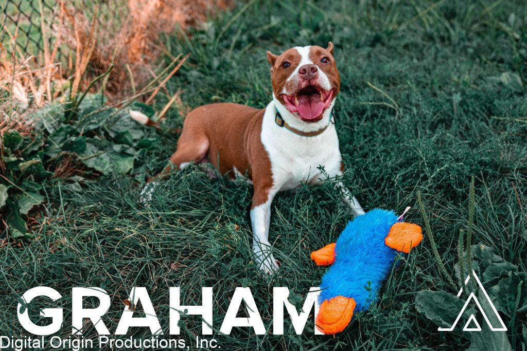 Graham came to us photo ready he was full of joy and always striking the best poses!